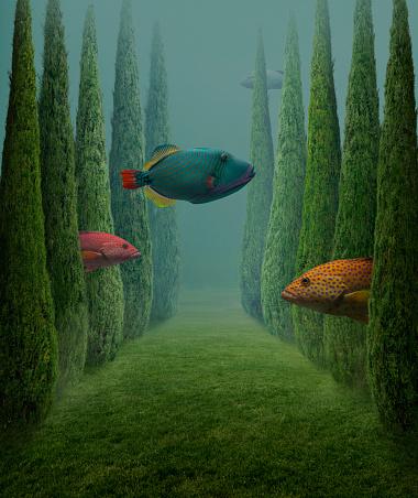 Tropical Tree「Big fishes」:スマホ壁紙(5)