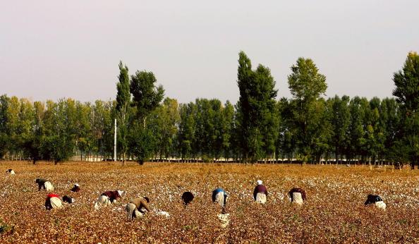 田畑「Migrant Workers Trek To Xinjiang To Pick Cotton」:写真・画像(3)[壁紙.com]