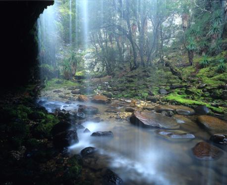 クレイドル山「Waterfall in a rainforested gorge in the Cradle Mt National Park Tasmania Australia.」:スマホ壁紙(14)