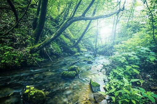 Satoyama - Scenery「Waterfall in Karuizawa, Japan」:スマホ壁紙(6)