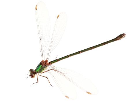 Dragonfly「Isolated Dragonfly」:スマホ壁紙(16)