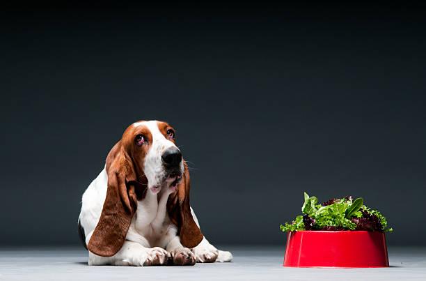 Dog with bowl of lettuce:スマホ壁紙(壁紙.com)