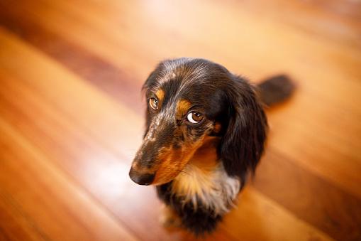 Sideways Glance「Cute dog with guilty face」:スマホ壁紙(4)