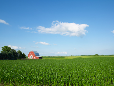 Agricultural Field「Corn field」:スマホ壁紙(18)