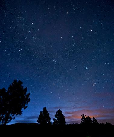 Vertical「Silhouette of trees under starry night sky」:スマホ壁紙(19)