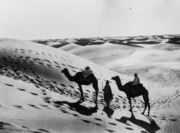 Recreational Pursuit「Sahara Camels」:写真・画像(9)[壁紙.com]
