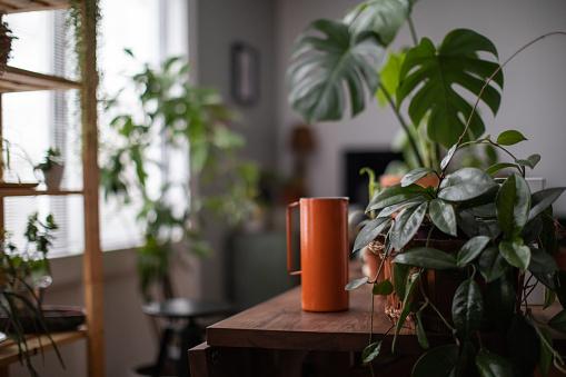Botany「Watering Houseplant, Indoors Gardening Concept」:スマホ壁紙(1)