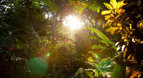 Rainforest「early morning in the rainforest, Costa Rica」:スマホ壁紙(1)