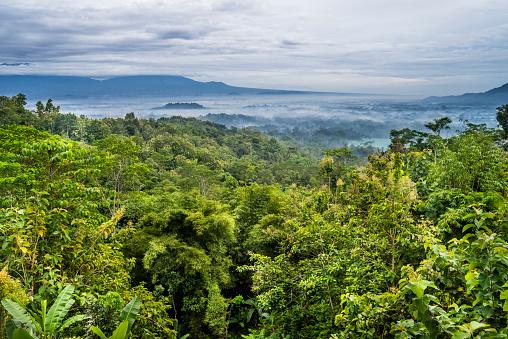 Rainforest「early morning mist over the Kedu Plain in Central Java with the distant stupas of ancient Borubudur Buddhist temple rising above the plain, Java, Indonesia」:スマホ壁紙(13)