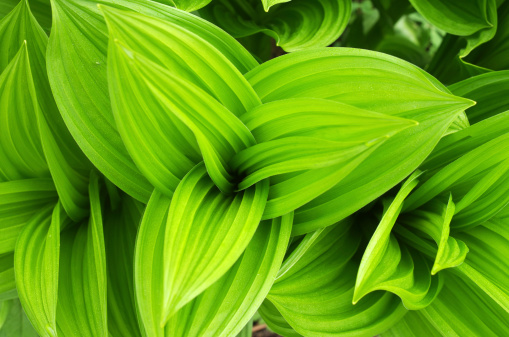 Growth「Leaves drops green」:スマホ壁紙(16)