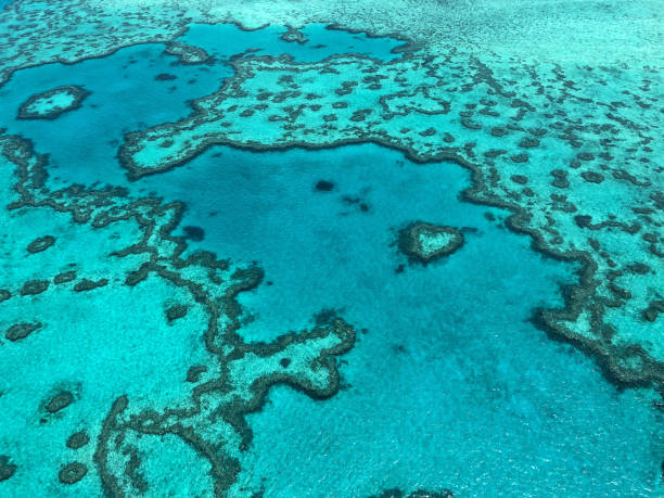 The Great Barrier Reef:スマホ壁紙(壁紙.com)
