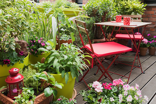 Tropical Tree「Balcony filled with large variety of potted herbs and flowers」:スマホ壁紙(15)