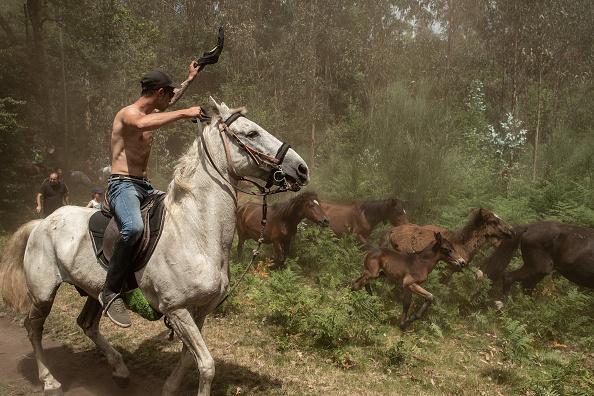 Horse「Rapa Das Bestas in Pontevedra」:写真・画像(3)[壁紙.com]