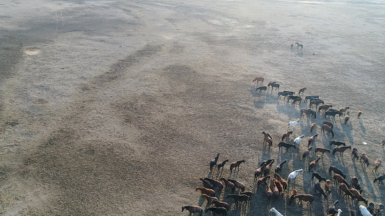 Shallow「Wild Horses of Anatolia aerial view photography」:スマホ壁紙(1)