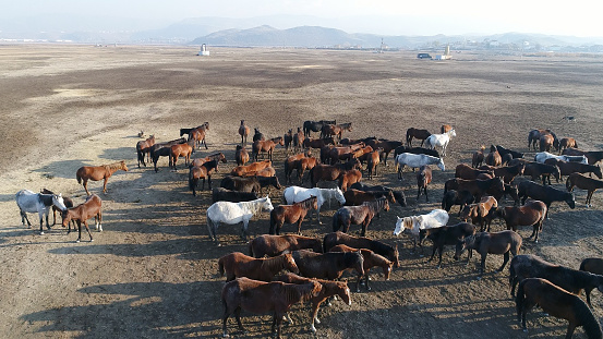 Shallow「Wild Horses of Anatolia aerial view photography」:スマホ壁紙(2)