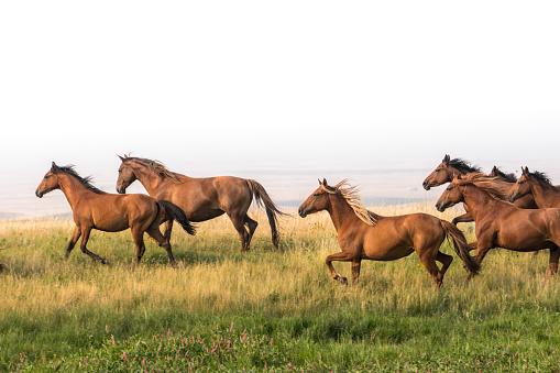 Medium Group Of Animals「Wild horses run along hillside above badlands」:スマホ壁紙(14)