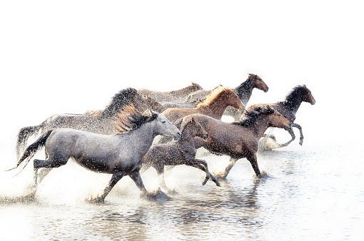 Horse「Wild Horses of Anatolia」:スマホ壁紙(1)