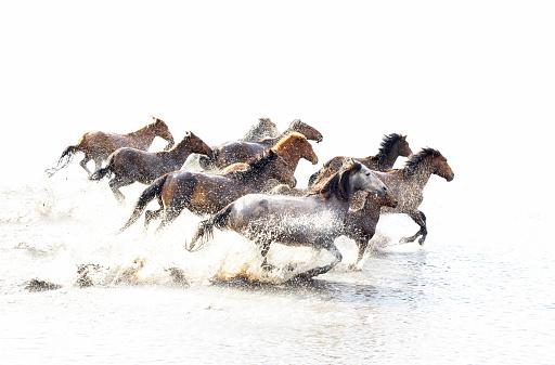 Horse「Wild Horses of Anatolia」:スマホ壁紙(16)