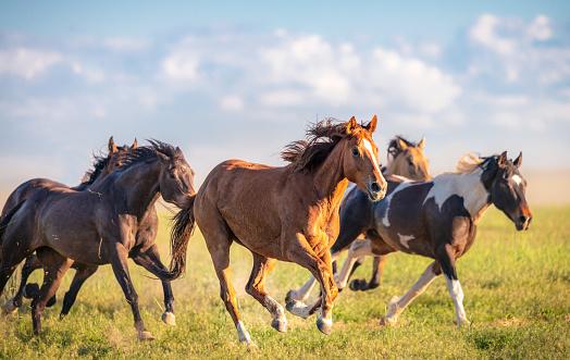 Herbivorous「Wild horses running free」:スマホ壁紙(11)