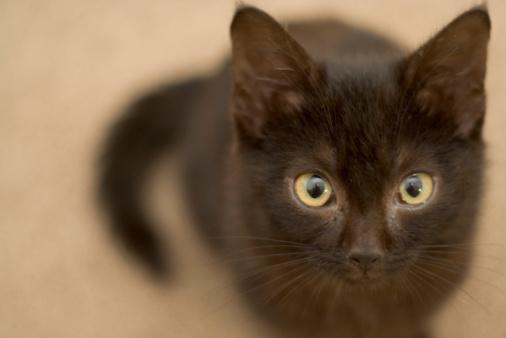 black cat「Adorable Black Kitten」:スマホ壁紙(18)