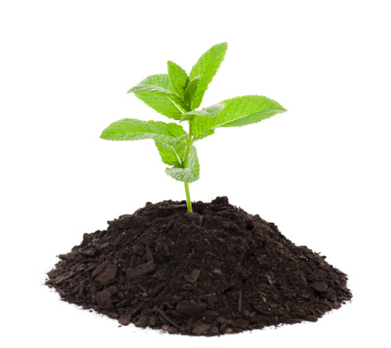 Planting「Seedling」:スマホ壁紙(8)