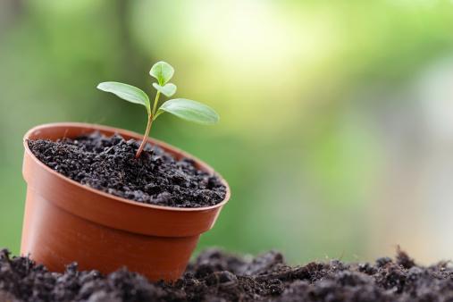 Planting「Seedling」:スマホ壁紙(5)