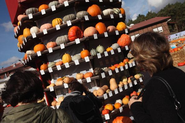 Beelitz「Autumn Is Pumpkin Season In Brandenburg」:写真・画像(5)[壁紙.com]