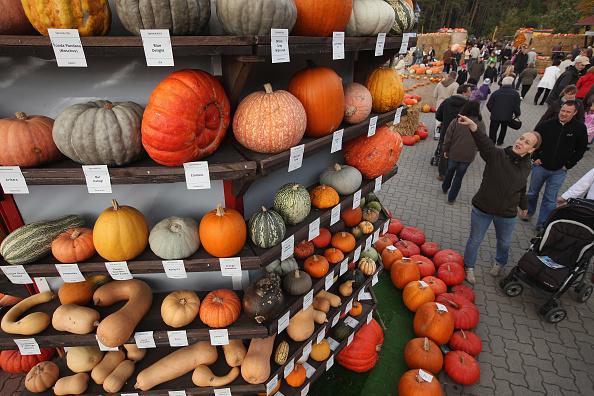 Beelitz「Autumn Is Pumpkin Season In Brandenburg」:写真・画像(3)[壁紙.com]