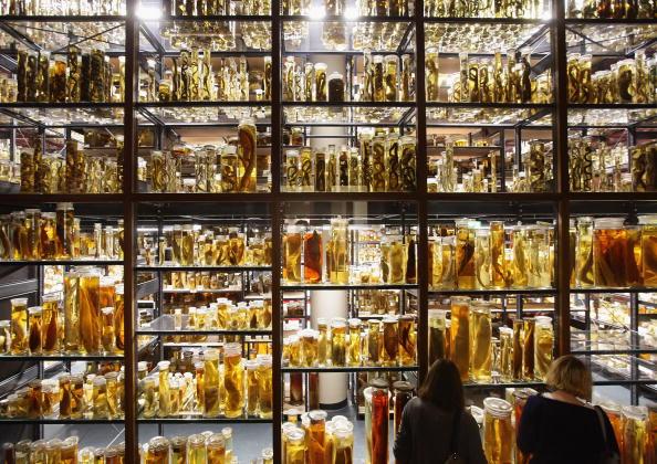 Drinking Glass「Natural History Museum Celebrates 200th Anniversary」:写真・画像(1)[壁紙.com]