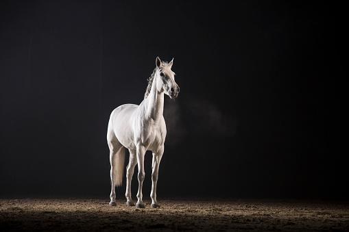 Horse「White horse」:スマホ壁紙(2)