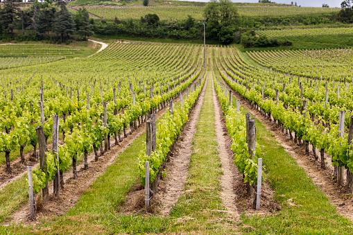 Nouvelle-Aquitaine「Famous vinyards of Saint-Émillion」:スマホ壁紙(10)