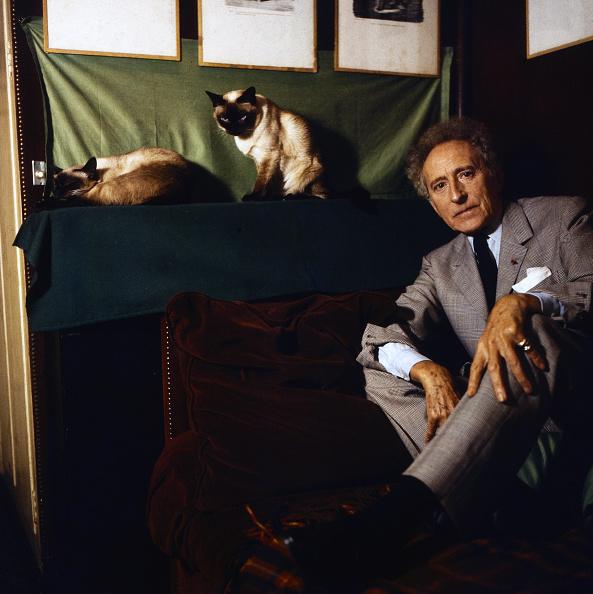 Purebred Cat「Jean Cocteau」:写真・画像(9)[壁紙.com]