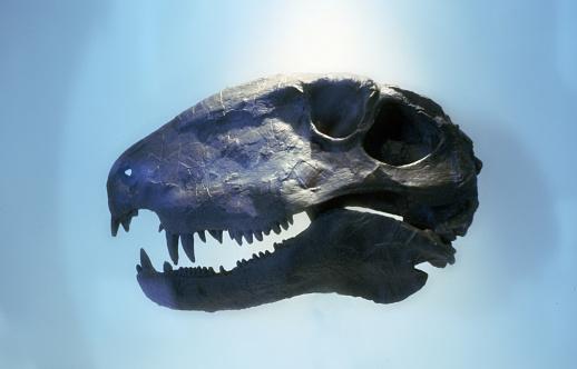 ウェルシュ・コーギー「dinosaur」:スマホ壁紙(13)