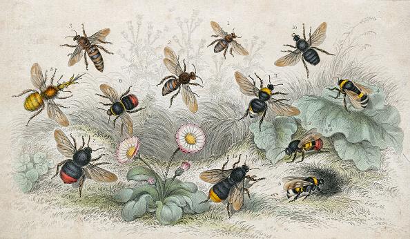 Illustration Technique「Bees In Colour」:写真・画像(1)[壁紙.com]