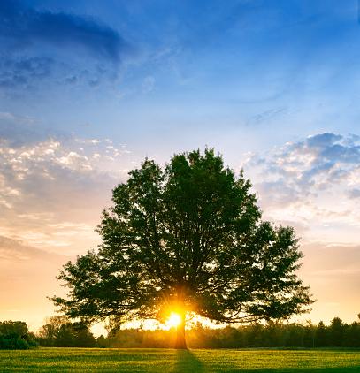 Single Tree「Bright sunrise behind lone tree」:スマホ壁紙(6)