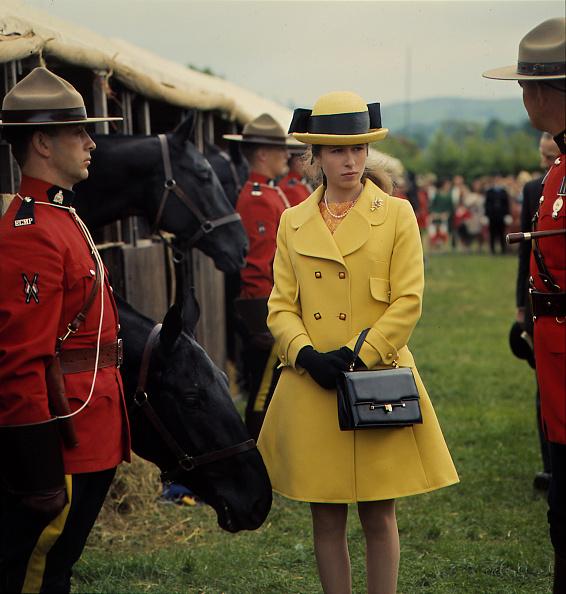 Horse「Princess Anne」:写真・画像(6)[壁紙.com]