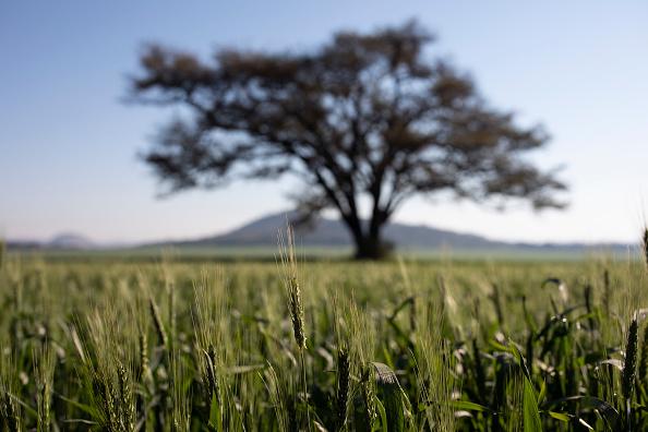 Growth「Farming In Zimbabwe」:写真・画像(18)[壁紙.com]