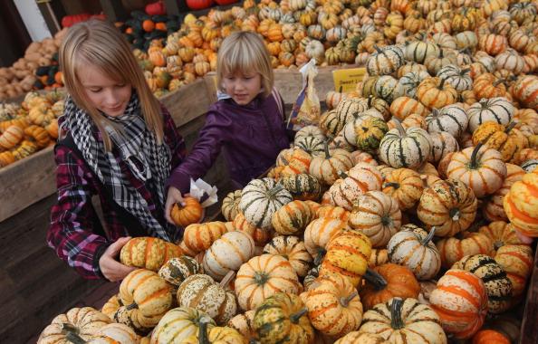 Beelitz「Autumn Is Pumpkin Season In Brandenburg」:写真・画像(4)[壁紙.com]