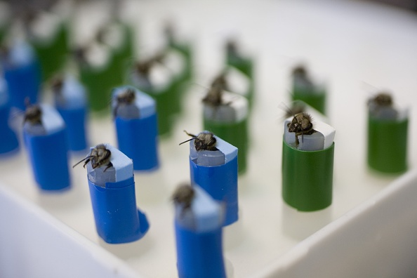 Rick Scibelli「Los Alamos Laboratory Trains Bees To Detect Explosives」:写真・画像(19)[壁紙.com]