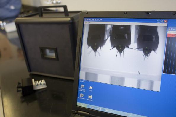 Rick Scibelli「Los Alamos Laboratory Trains Bees To Detect Explosives」:写真・画像(16)[壁紙.com]