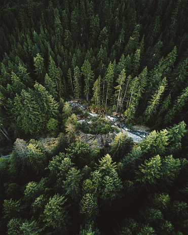 Pine Woodland「green tree aerial view in washington state」:スマホ壁紙(12)