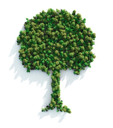 Reforestation「Green Tree」:スマホ壁紙(6)