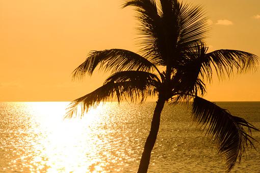 Sunrise - Fort Lauderdale「USA, Florida, Boca Raton, Silhouette of palm tree against sea at sunrise」:スマホ壁紙(16)