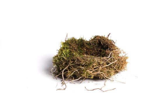 枝「鳥の巣」:スマホ壁紙(18)