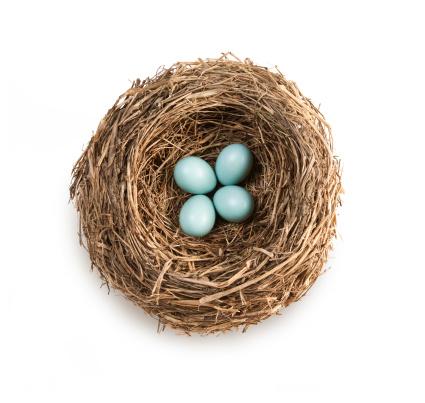 Meteorology「Bird's nest with four blue eggs」:スマホ壁紙(8)
