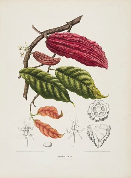 Botany「Theobroma」:写真・画像(6)[壁紙.com]