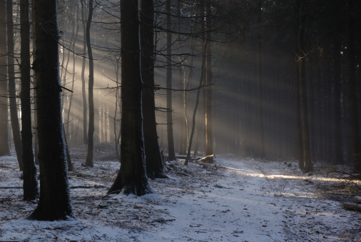 Boreal Forest「Snow Covering Ground in Dark Forest」:スマホ壁紙(13)