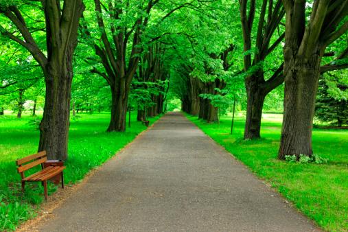 Footpath「Path in Park」:スマホ壁紙(5)