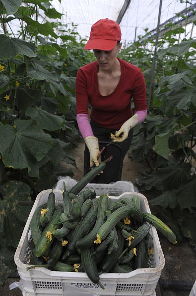 Greenhouse「Spanish Farmers Suffer Losses Due To EHEC Outbreak」:写真・画像(9)[壁紙.com]