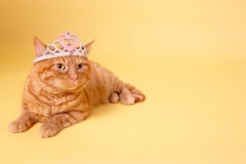 Crown - Headwear「Cat wearing tiara」:スマホ壁紙(3)